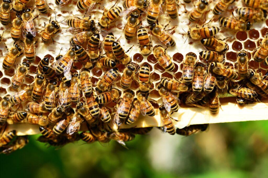 dzien pszczol
